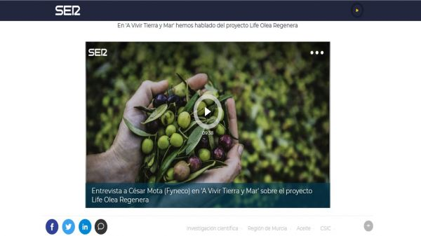 A project of the Murcian company Fyneco studies how to convert the olive oil alperujo into agricultural biostimulants