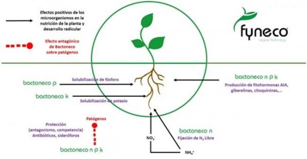 BACTONECO: Biofertilizante ecológico de Fyneco