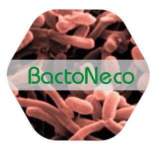 Bactoneco