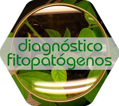 Diagnóstico de fitopatógenos
