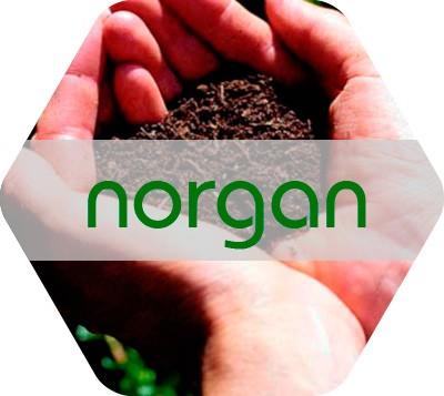 Norgan