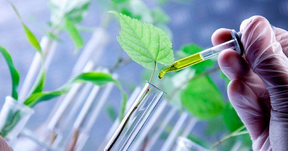 Vegetable plant vaccines